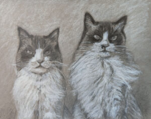 pet portrait. Drawing of two cats